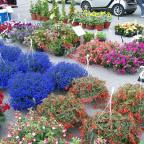 May Flowers Days at Clarence Hollow Farmers' Market