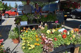 Farmers Market LeRoy 010